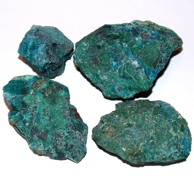 chrysocolle brute